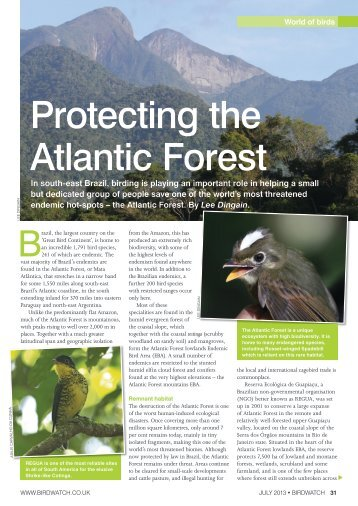Protecting the Atlantic Forest
