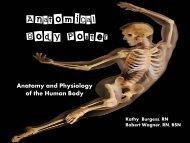 Anatomical Body Poster