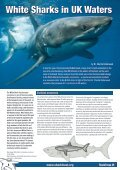 Shark Focus - Page 6