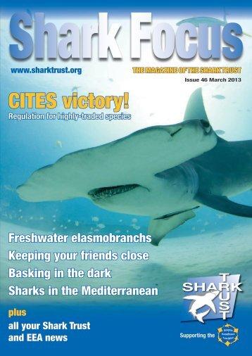 Shark Focus