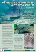Shark Focus - Page 4