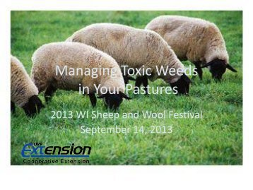 Managing Toxic Weeds in Your Pastures