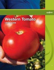 Western Tomato