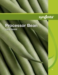 Processor Bean
