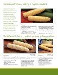 Sweet Corn - Page 4