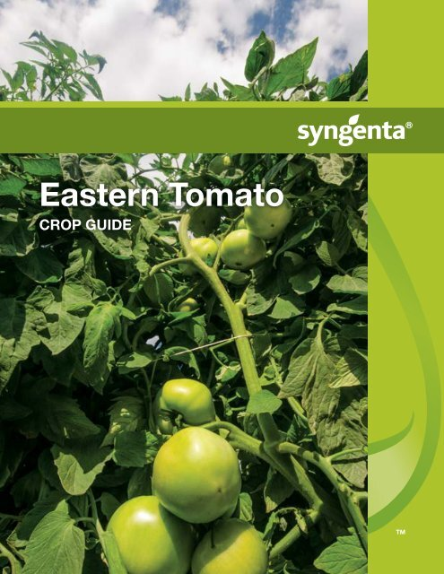 Eastern Tomato