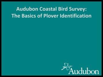 Presentation - Plover Identification