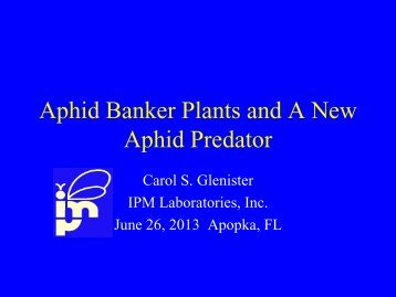 Aphid Guard Banker Plant