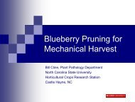 Blueberry Pruning for Mechanical Harvest