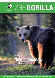 ZGF Gorilla | Juli 2012 - Frankfurt Zoological Society