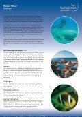 Tauchresort's am Roten Meer - Hang Loose Travel - Seite 6