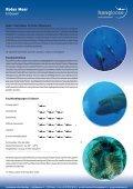 Tauchresort's am Roten Meer - Hang Loose Travel - Seite 7