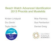 Beach Watch Advanced Identification 2013 Phocids and Mustelids!