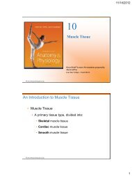 10 Muscle Tissue - Library