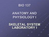 Skeletal Lab 1
