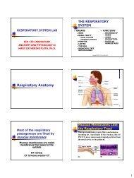 Respiratory Anatomy