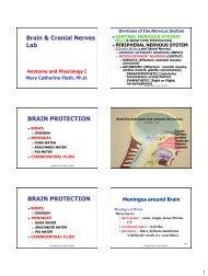 Brain & Cranial Nerves Lab BRAIN PROTECTION BRAIN PROTECTION
