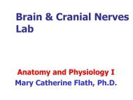 Brain & Cranial Nerves Lab