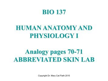 BIO 137 HUMAN ANATOMY AND PHYSIOLOGY I Analogy pages 70-71 ABBREVIATED SKIN LAB