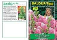 BALDUR-Tipp