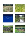 Fauquier County Wetland & Stream Restoration - Page 5