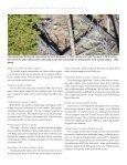 Elk/Bison - Page 6