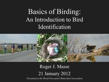 Basics of Birding