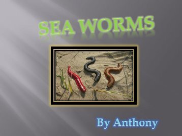 WHAT ARE SEA WORMS?
