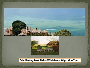 Scintillating East Africa Wildebeest Migration Tour