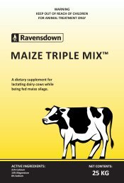A dietary supplement for lactating dairy cows while being fed maize silage