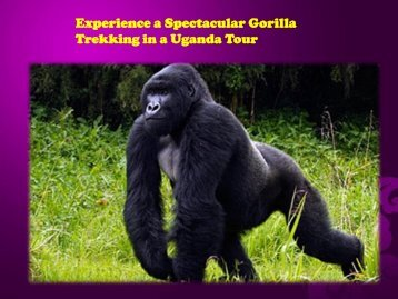 Spectacular Gorilla Trekking