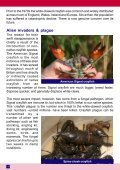 White-clawed Crayfish - Page 4