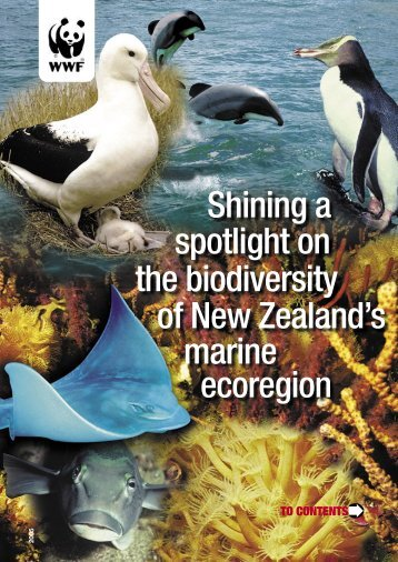 Shining a spotlight on the biodiversity of New Zealand's marine ecoregion