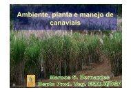 Ambiente, planta e manejo de canaviais - Departamento de ...