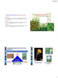 3/6/2012 Plantas Daninhas 1
