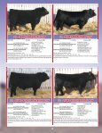 the Skor Bull Sale - Transcon Livestock Corporation - Page 6