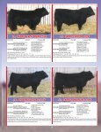the Skor Bull Sale - Transcon Livestock Corporation - Page 7