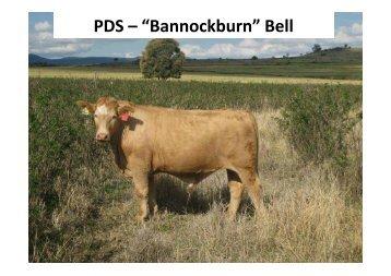 """PDS – """"Bannockburn"""" Bell"""