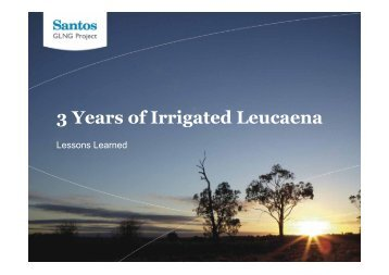 3 Years of Irrigated Leucaena