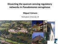 Dissecting the quorum sensing regulatory networks in Pseudomonas aeruginosa