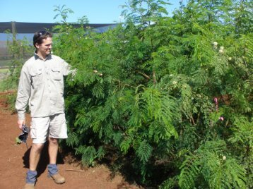 Psyllid-resistant leucaena verities at the Cleveland Research Station