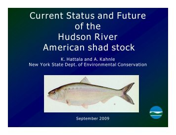 Current Status and Future of the Hudson River American shad stock