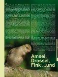 Meister (r)Ade(l)bar – mit dem Storch unterwegs im Altmühltal - LBV - Seite 6