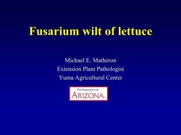 Fusarium wilt of lettuce