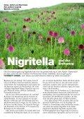 Nigritella und der Erzherzog Mormodes und die Bienen Limodorum ... - Seite 3
