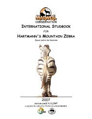 international studbook hartmann's mountain zebra - Marwell Zoo