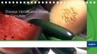 Disease Identification Guide for Cucurbits