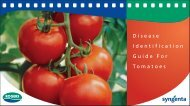 Guide For Tomatoes