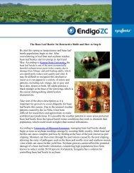 The Bean Leaf Beetle: Its Destructive Habit and How to ... - FarmAssist