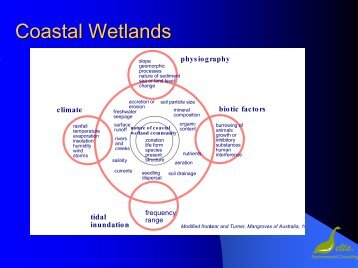 Coastal Wetlands Coastal Wetlands